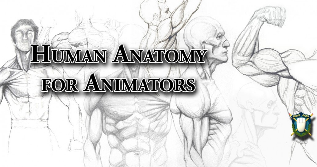 Human Anatomy For Animators The Skeleton And Muscles