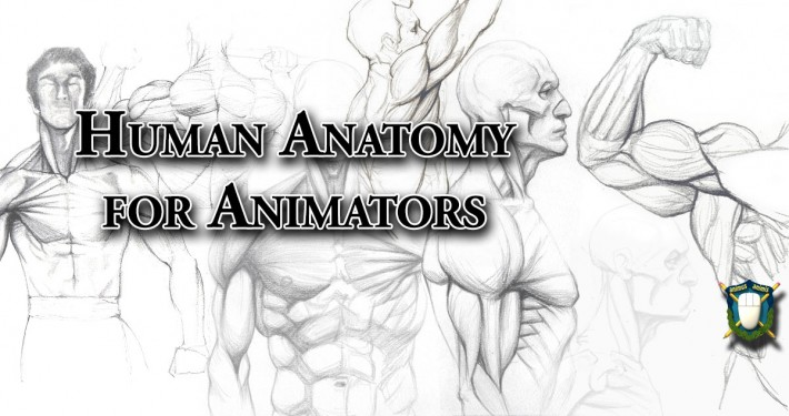 Human Anatomy for Animators - drawings by kimsuyeong