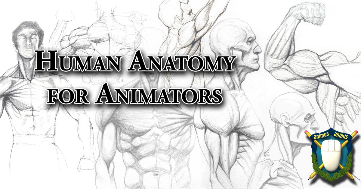 Human Anatomy for Animators - the Skeleton and Muscles